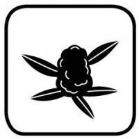 En cañamo Grow encontraras los mejores productos de floracion para aumentar el tamaño y calidad de tus plantas.